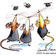 Graduate Mice